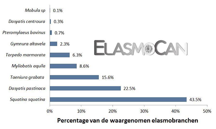 Burgerwetenschap ElasmoCan: Waarneming van de elasmobranchen of kraakbeenvissen door duikers in El Cabrón (Gran Canaria).