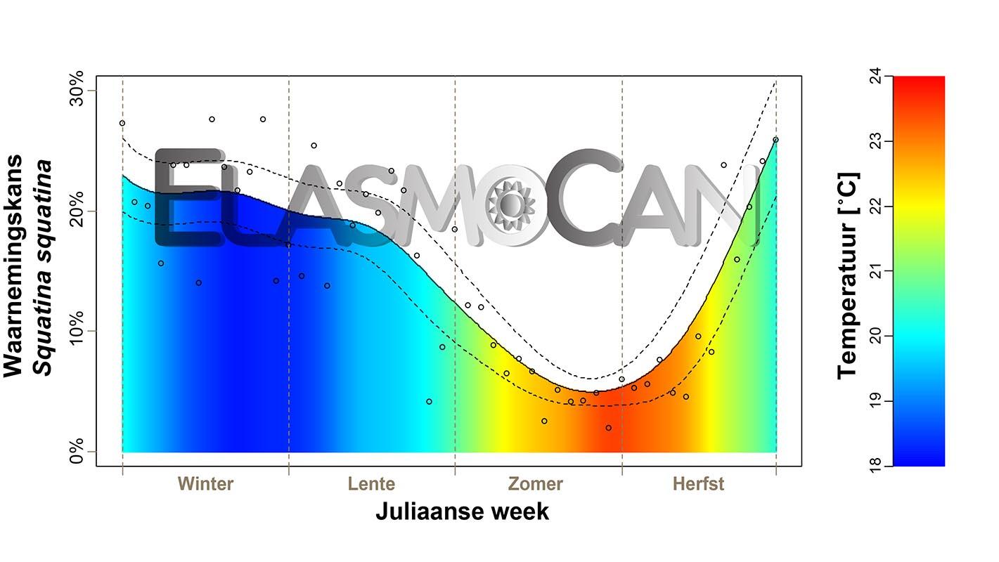 Burgerwetenschap ElasmoCan: Waarnemingen van de zee-engel Squatina squatina door duikers in El Cabrón (Gran Canaria).