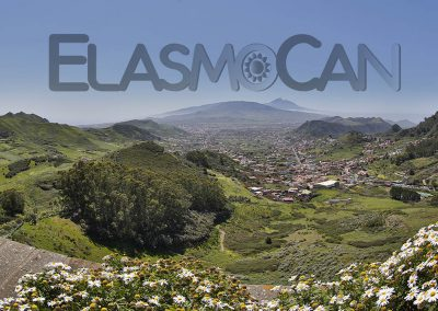 Tenerife incl. El Teide (ElasmoCan)