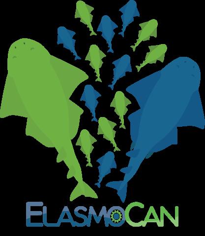 Investigación de la reproducción del Angelote (Squatina squatina) por ElasmoCan