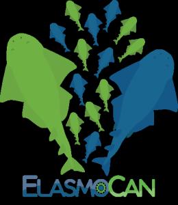 Voortplanting van de zee-engel of engelhaai (Squatina squaitna) - ElasmoCan