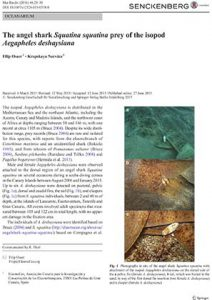 The angelshark Squatina squatina prey of the isopod Aegapheles deshaysiana_DOI10.1007s12526-015-0358-0