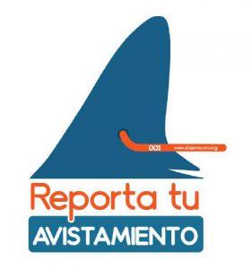 Ayúdanos en la conservación de los tiburones martillos y reporta tu avistamiento de una cornuda marcado por ElasmoCan