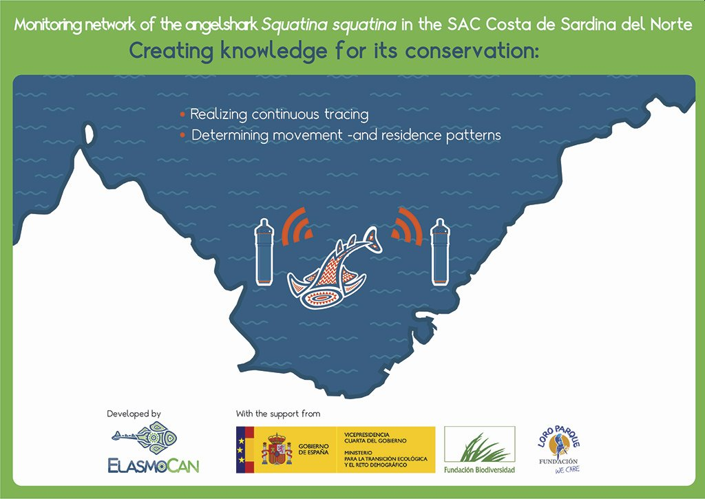 "Infographic of the research project ""Monitoring network for the angelshark Squatina squatina in the SAC Costa de Sardina del Norte: creating knowledge for its conservation"", developed by ElasmoCan with the financial support from Biodiversity Foundation from the Ministry for Ecologic Transition and the Demographic Challenge and Loro Parque Fundación. Credit: ElasmoCan."